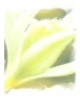SerLaure fenua