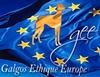 Bienvenue sur le blog de l'association Galgos Ethique Europe