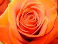 la-tite-fleuriste
