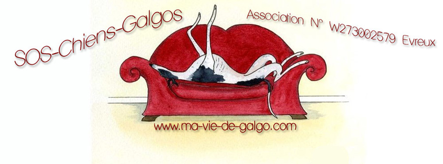 Association animale ma-vie-de-galgo